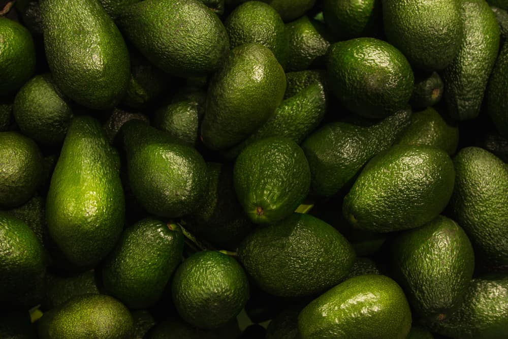 Avocado and their introduction to the US market.